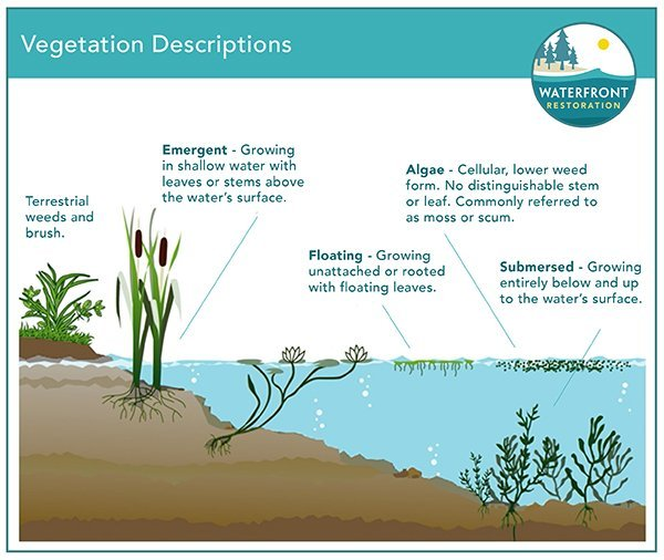 Types of Vegetation