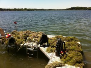 Lake Minnetonka Donation of Lake Weeds
