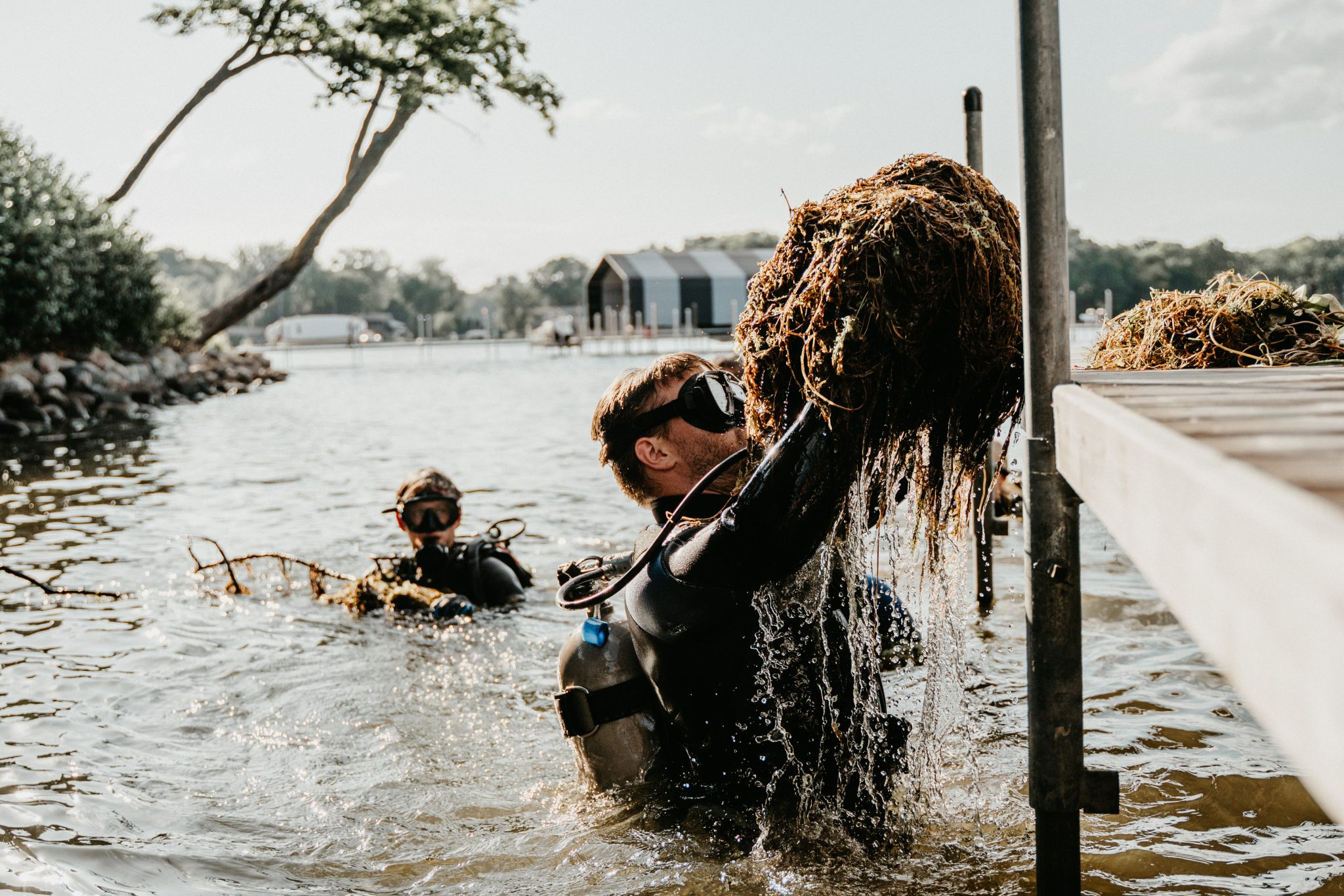 SCUBA diver gets to the root of these lake weeds and hoists a mass of weeds onto a dock.